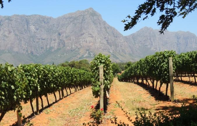Nanne wijnboerderijen